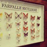 Farfalle siciliane