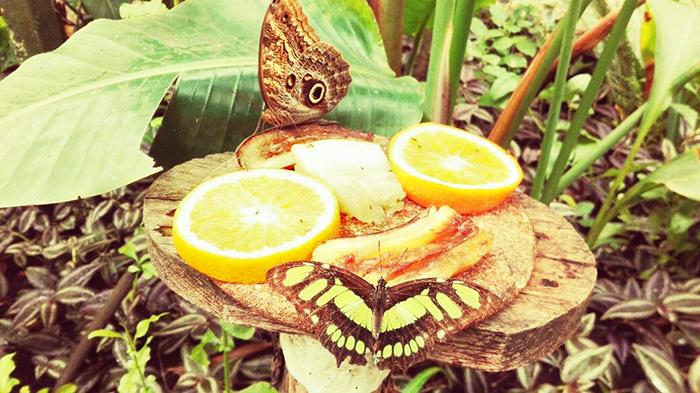 casa delle farfalle etna