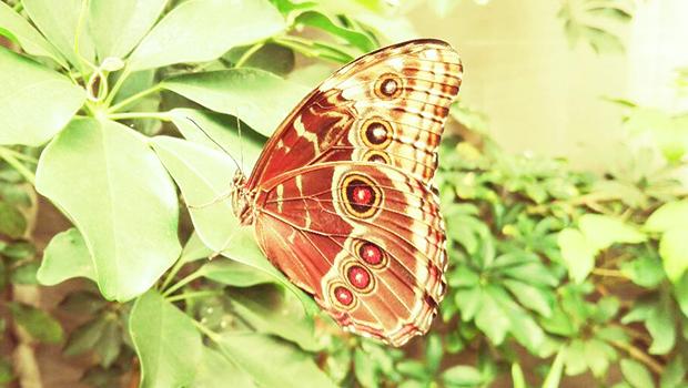 Farfalla rossa e bianca