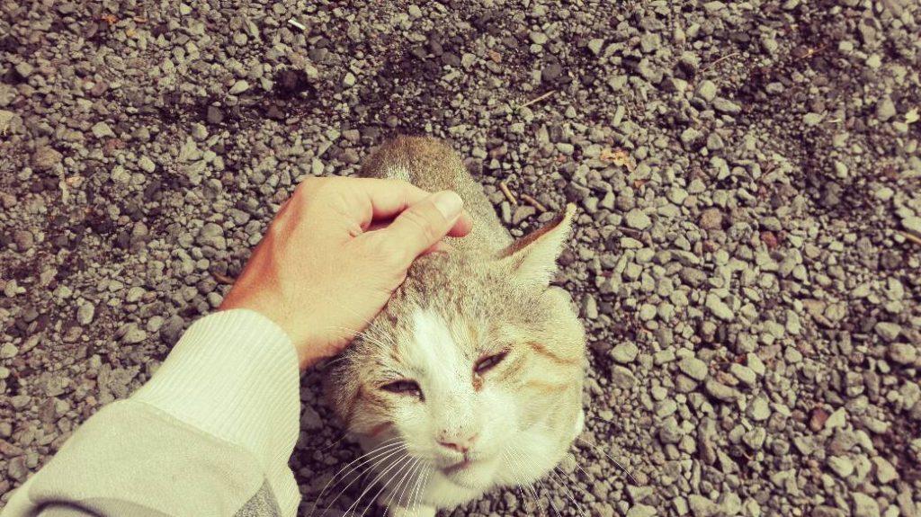 gatto alla casa delle farfalle, sull'Etna