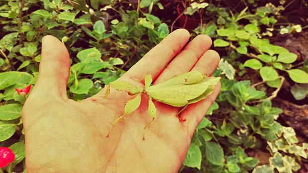 insetto foglia verde