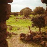 Nuraghe di Orroli, vista dall'interno