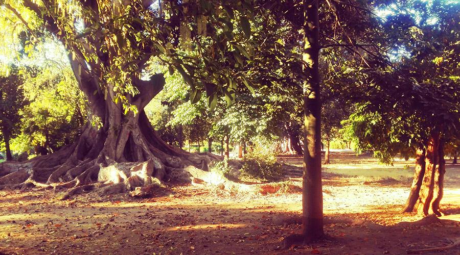 I 5 Parchi di Palermo da non perdere per nessun motivo